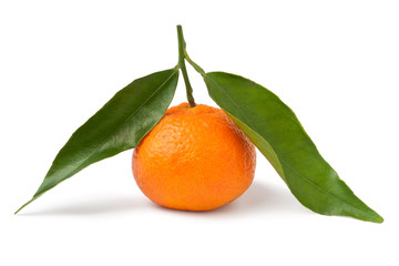 single tangerine with leaves