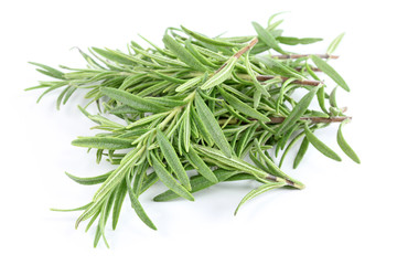 Closeup photo of fresh Rosemary