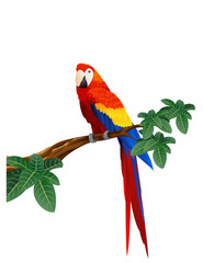 Detaied macaw bird illustration