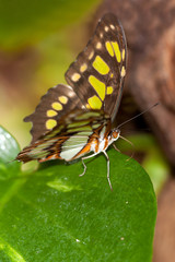 Yellow butterfly in the tropical jungle of Mexico