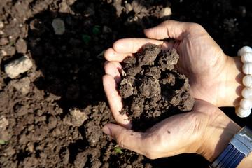 Cultivated garden soil