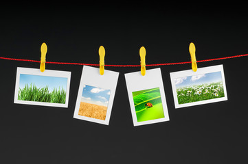 Various nature photos hanging