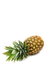 isolated pineapple with space for text