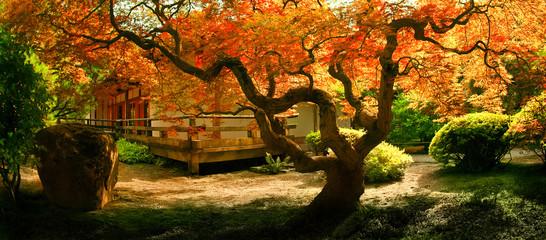 Printed roller blinds Garden Tree in an Asian Garden
