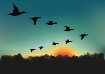 Oiseaux_migrateurs Wall mural
