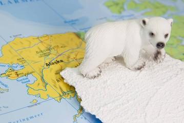 Ein Eisbär in Alaska