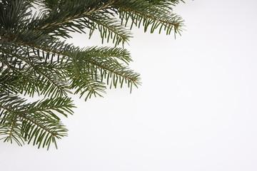 tanenbaum tannenzweig