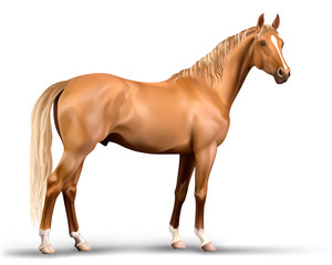 Vector photo-realistic red horse