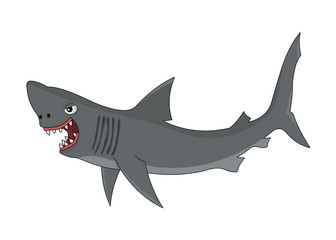 Cartoon shark on white background