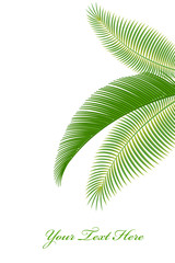 Palm Tree Leaves on Isolated White Background