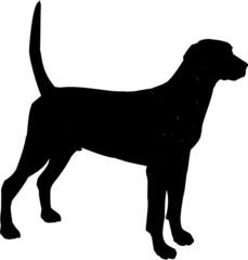 chien domestique