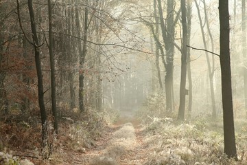 Keuken foto achterwand Bos in mist Forest trail among the plants covered with frost