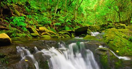 Wall Mural - Beautiful Lush Waterfall
