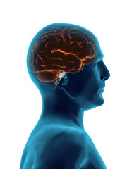 Brain 3D faded transparent