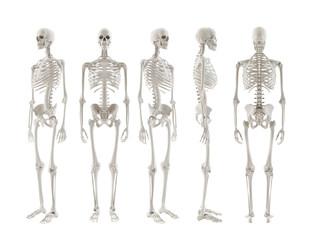 Skelett turnaround