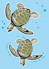 tortue marine aquatique animal pacifique