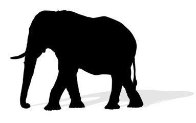 animal - elephant, vector