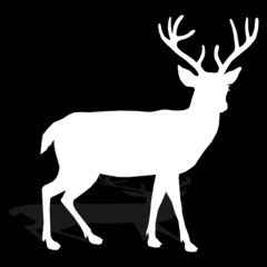 animal - deer, vector