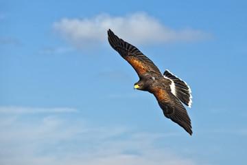 Master of Flight