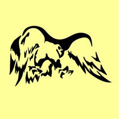 eagle hawk bird hawk tattoo