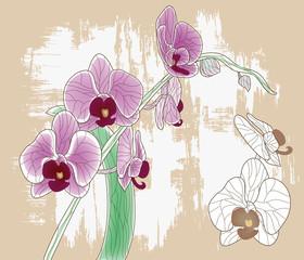 orchidea - dipinto artistico