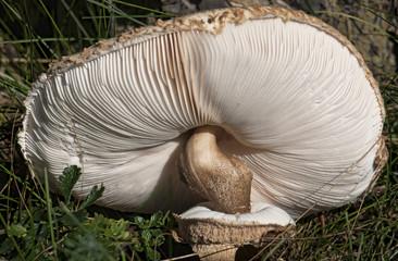 Mushroom close-up