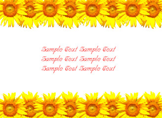blossom sunflower background with space for filling texts
