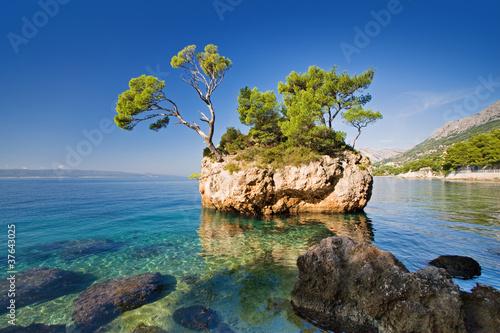 природа море деревья камни скалы  № 38390 загрузить