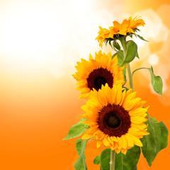 sun flowers on sky