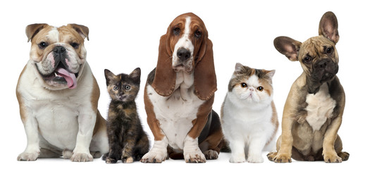 Wall Mural - Group of cats and dogs in front of white background