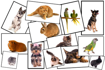 collage animalier