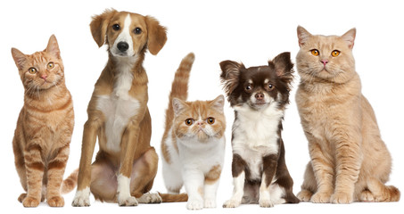 Fototapete - Group of cats and dogs in front of white background