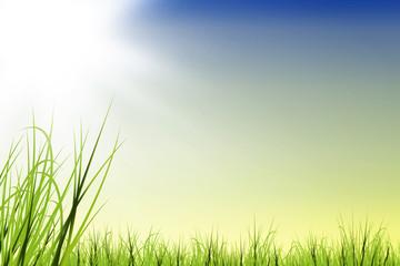 Gras wiese mit Sonnenschein