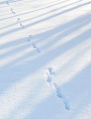 Fototapete - Hare trace