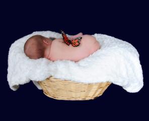 newborn in basket sleeping on side. isolated