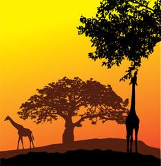 Aluminium Prints vector giraffe silhouettes
