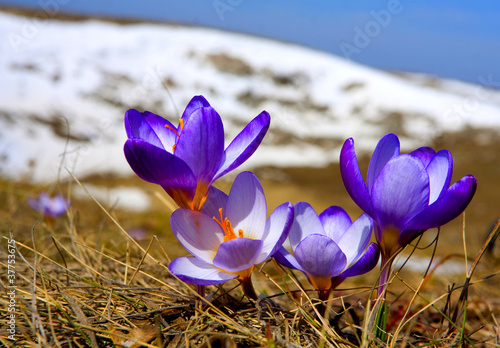 early spring images - HD1600×900