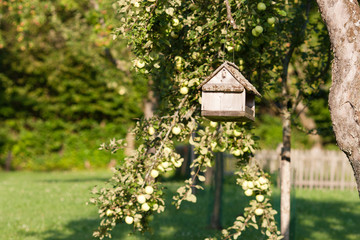 Countryside scene: bird table/feeder suspended from a tree