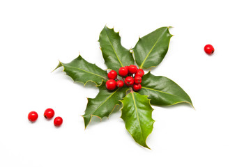 Holly Branch and Berries