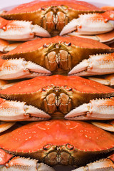Fresh steamed Dungeness Crab