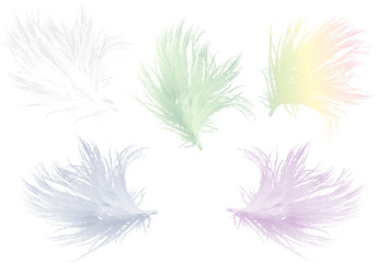 five color feathers isolated on white