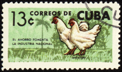 Rooster and hen on post stamp