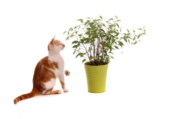 junge Katze spielt mit Blättern