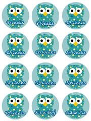 Pregnancy Owl Set - Boy