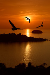 Seagull hover between sunset and orange sky.
