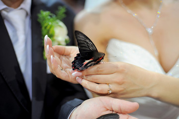 bride is holding a butterfly in his hands