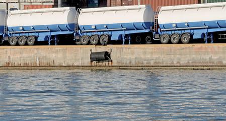 storage of goods in the harbor