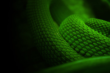 snake green skin
