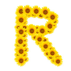 alphabet R , sunflower isolated on white background