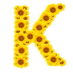 alphabet K , sunflower isolated on white background